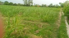 Vegetation, Plant, Grass, Land, Tree, Forest, Woodland, Field, Bush, Ditch, Grassland, Path, Jungle, Grove, Rainforest
