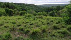Vegetation, Plant, Bush, Grass, Wilderness, Land, Forest, Tree, Woodland, Landscape, Field, Green, Grassland, Rainforest, Jungle