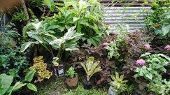 Plant, Leaf, Blossom, Flower, Garden, Yard, Potted Plant, Pottery, Jar, Vase, Araceae, Vegetation, Planter, Herbs, Tree
