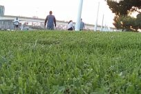 Plant, Grass, Vegetation, Bush, Field, Lawn, Yard, Countryside, Vase, Pottery, Jar, Land, People, Tree, Building