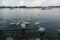Water, Bird, Waterfront, Boat, Vehicle, Dock, Pier, Port, Waterfowl, Swan, Harbor, Ocean, Sea, Ardeidae, Heron