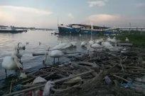 Water, Bird, Waterfront, Boat, Vehicle, Port, Dock, Pier, Harbor, Waterfowl, Sea, Ocean, Watercraft, Vessel, Seagull