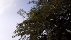 Plant, Tree, Weather, Vegetation, Conifer, Abies, Fir, Sky, Silhouette, Woodland, Land, Forest, Grass, Cloud, Pine