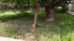 Plant, Tree, Tree Trunk, Vegetation, Yard, Ground, Grass, Land, Woodland, Forest, Field, Grove, Backyard, Grassland, Pet