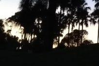 Tree, Arecaceae, Palm Tree, Silhouette, Sky, Building, Tropical, Land