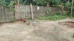 Bicycle, Vehicle, Bike, Zoo, Wheel, Poultry, Bird, Chicken, Fowl, Yard, Plant, Vegetation, Wood, Land, Building