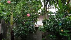 Plant, Vegetation, Leaf, Tree, Land, Rainforest, Jungle, Garden, Arbour, Flower, Blossom, Bush, Geranium, Food, Woodland