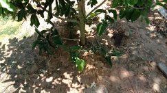 Plant, Vegetation, Yard, Tree, Jar, Potted Plant, Pottery, Vase, Leaf, Ground, Soil, Blossom, Flower, Land, Jungle