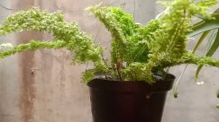 Plant, Jar, Potted Plant, Pottery, Vase, Tree, Moss, Vegetation, Leaf, Fern, Planter, Garden, Bonsai, Herbs, Rainforest