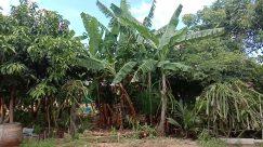 Plant, Vegetation, Land, Rainforest, Tree, Jungle, Leaf, Field, Arecaceae, Palm Tree, Yard, Forest, Woodland, Grove, Green