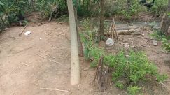Vegetation, Plant, Tree, Rainforest, Land, Leaf, Jungle, Bird, Ground, Woodland, Forest, Path, Soil, Food, Grove