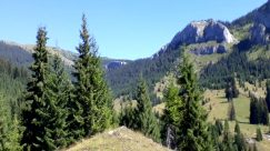 Tree, Plant, Abies, Fir, Mountain, Conifer, Slope, Vegetation, Wilderness, Mountain Range, Peak, Pine, Land, Woodland, Forest