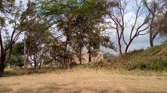 Plant, Vegetation, Bush, Tree, Building, Land, Woodland, Forest, Countryside, Shelter, Rural, Housing, Villa, House, Yard