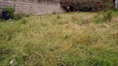 Vegetation, Bush, Plant, Grass, Yard, Tree, Wall, Backyard, Lawn, Field, Grassland, Blossom, Flower, Landscape, Land