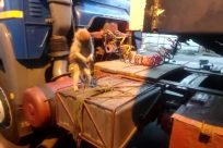Wildlife, Monkey, Baboon, Vehicle, Fire Truck, Wood, Electronics, Screen, Tire, Play, Automobile, Car, Display, Monitor