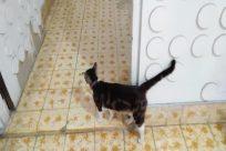 Floor, Pet, Cat, Flooring, Strap, Home Decor, Dog, Canine, Abyssinian, Manx, Face, Cushion, Pillow, Kitten, Snout