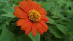 Plant, Leaf, Blossom, Flower, Daisies, Daisy, Grass, Asteraceae, Produce, Aster
