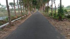 Vehicle, Motorcycle, Road, Wheel, Garden, Arbour, Path, Plant, Tree, Bike, Bicycle, Vegetation, Building, City, Street