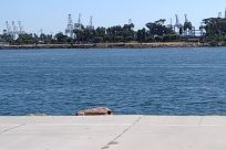 Water, Waterfront, Vacation, Shorts, Pants, Port, Pier, Dock, Ocean, Sea, Building, People, Harbor, Shoreline, Female