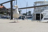 Bird, Seagull, Boat, Vehicle, Waterfowl, Beak, Water, Albatross, Waterfront, Port, Pier, Dock, Shoreline, Ocean, Coast