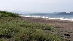 Water, Shoreline, Ocean, Sea, Beach, Coast, Promontory, Plant, Grass, Ground, Land, Vegetation, Landscape, Sand, Bird