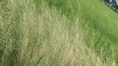 Grass, Plant, Vegetation, Lawn, Land, Field, Bush, Forest, Tree, Woodland, Grassland, Green, Ditch, Yard, Countryside