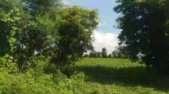 Plant, Vegetation, Weather, Tree, Cloud, Sky, Cumulus, Land, Field, Forest, Woodland, Grassland, Countryside, Bush, Rural