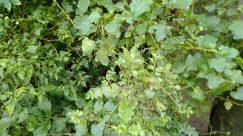 Plant, Brick, Leaf, Blossom, Flower, Geranium, Vegetation, Ivy, Food, Vine, Tree, Petal, Produce, Jar, Pottery