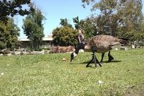 Bird, Goose, Tripod, Grass, Plant, Zoo, Vegetation, Bush, Waterfowl, Yard, Emu, Tree, Lawn, Park, Beak