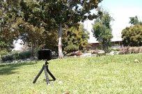 Tripod, Yard, Bird, Soil, Plant, Tree, Oak, Furniture, Zoo, Grass, Photo, Photography, Beak