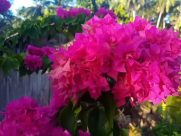 Flower, Geranium, Blossom, Plant, Peony, Carnation, Petal, Flower Arrangement, Flower Bouquet, Vegetation, Dahlia, Bush, Pottery, Vase, Jar