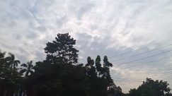 Cable, Power Lines, Electric Transmission Tower, Weather, Plant, Tree, Road, Abies, Fir, Vegetation, Sky, Cloud, Cumulus, Building, Silhouette