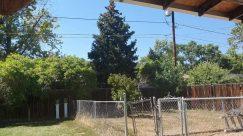 Yard, Plant, Vegetation, Tree, Woodland, Land, Forest, Abies, Fir, Grove, Backyard, Grass, Ball, Countryside, Building