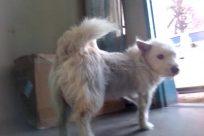 Dog, Pet, Canine, Wheel, Golden Retriever, Vehicle, Van, Car, Automobile, Eskimo Dog, Home Decor, Window, Cushion, Puppy, Cat
