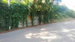 Road, Automobile, Car, Vehicle, Plant, Vegetation, Bush, Vine, Path, Garden, Trail, Tree, Arbour, Freeway, Wheel