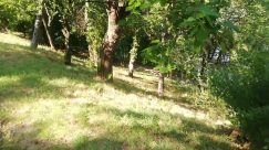 Plant, Vegetation, Tree, Land, Forest, Woodland, Bush, Grass, Yard, Grove, Tree Trunk, Oak, Jungle, Leaf, Field
