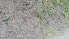 Ground, Grass, Plant, Bike, Bicycle, Vehicle, Vegetation, Road, Soil, Slope, Path, Land, Tree, Trail, Sunlight