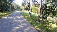 Path, Plant, Vegetation, Tree, Grass, Trail, Woodland, Forest, Land, Grove, Pavement, Sidewalk, Road, Tree Trunk, Park