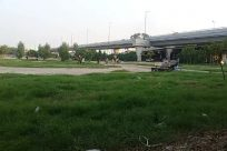 Road, Grass, Freeway, Bridge, Tree, Park, Overpass