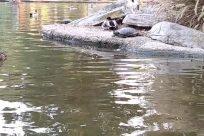 Water, Bird, Waterfowl, Zoo, Pond, River, Rock, Duck, Mallard, Land, Beak, Teal, Shoreline, Sea, Ocean