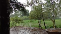 Vegetation, Plant, Tree, Woodland, Forest, Land, Grove, Grass, Yard, Jungle, Rainforest, Arecaceae, Palm Tree, Water, Bush