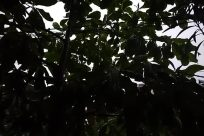 Vegetation, Plant, Leaf, Land, Tree, Jungle, Sunlight, Vehicle, Car, Automobile, Silhouette, Forest, Woodland, Green, Greenhouse