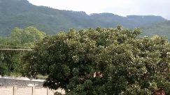 Bush, Vegetation, Plant, Tree, Roof, Land, Forest, Woodland, Building, Oak, Countryside, Shelter, Rural, Yard, Grove