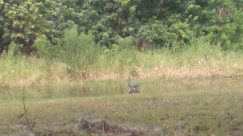 Bird, Plant, Vegetation, Wildlife, Land, Bush, Ground, Deer, Elk, Grass, Waterfowl, Canine, Water, Kit Fox, Fox