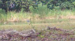 Vegetation, Plant, Bush, Wildlife, Ground, Land, Deer, Elk, Grass, Tree, Bird, Coyote, Soil, Canine, Symbol