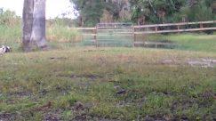 Field, Ground, Grassland, Land, Countryside, Wildlife, Plant, Tree, Grass, Rural, Vegetation, Farm, Pasture, Yard, Ranch