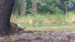 Plant, Vegetation, Land, Bird, Ground, Wildlife, Tree, Canine, Fox, Kit Fox, Deer, Elk, Bush, Grass, Water