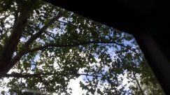 Plant, Tree, Tree Trunk, Sky, Vegetation, Cloud, Oak, Weather, Sunlight, Cumulus, Woodland, Forest, Land, Lamp Post, Azure Sky