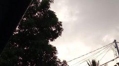 Plant, Christmas Tree, Tree, Ornament, Vegetation, Silhouette, Sunlight, Flare, Light, Bush, Grass, Sky, Building, Town, City