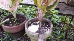 Plant, Potted Plant, Vase, Jar, Pottery, Soil, Planter, Leaf, Herbs, Herbal, Bird, Food, Vegetable, Tree, Sprout